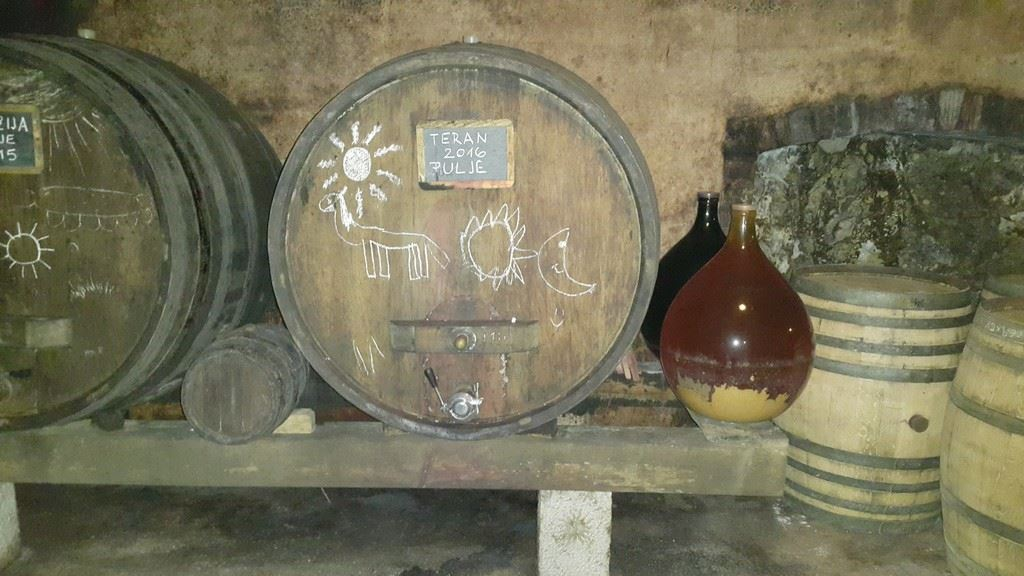 Wine tour to Karst wine region, Cotar ecological winery